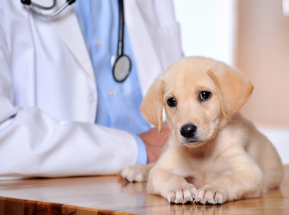 Inland Empire, CA. Pet Clinic Insurance